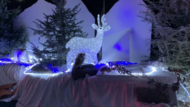 Weihnachts-Drive-in Kalkar - Lichterdeko